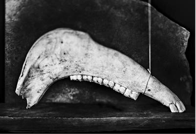Jawbone by Tariq Dajani