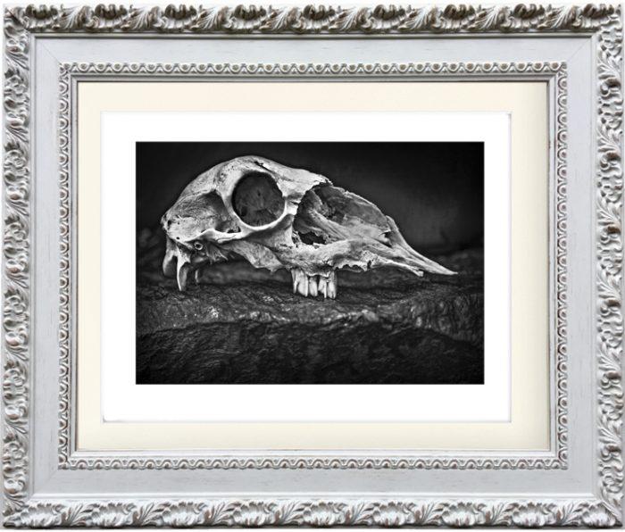 Skull 2 by Tariq Dajani